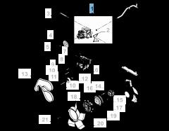 Kit pompa acqua ( pompa, guarnizione e vite) -3pz per Fiat e Fiat Professional